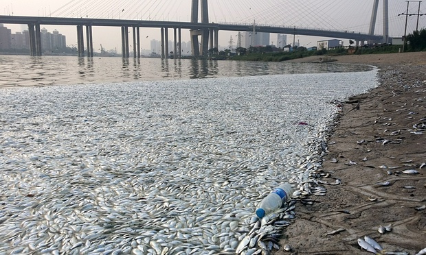 The mass fish deaths in the Haine river, 7kms from Tianjin.